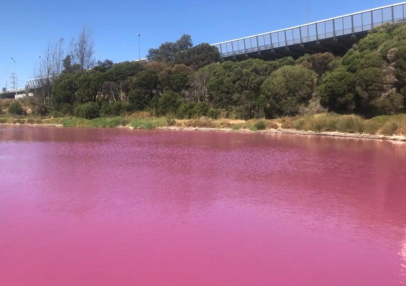 gorąco lato pigment algi jezioro Melbourne