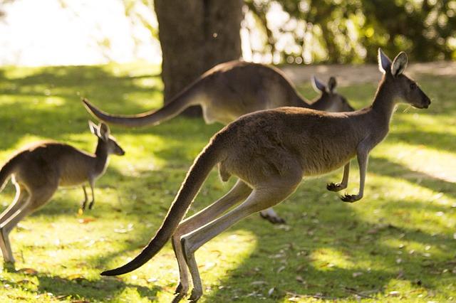 pory roku w Australii, zima w Australii, lato w Australii, pogoda Sydney, pogoda Melbourne, pogoda Cairns, pogoda Perth
