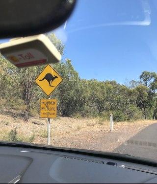 ruch lewostronny w Australii kangury na drogach znaki