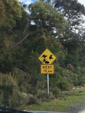 przepisy drogowe w Australii znaki